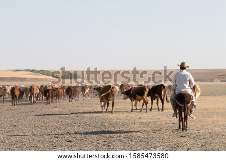 The villagers living near the salt lake make livelihood by doing cattle breeding.