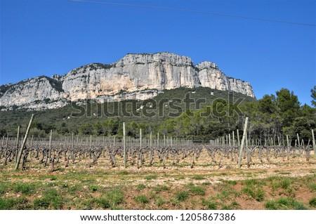 the vineyard of pic saint loup ,occitanie ,france