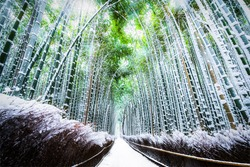 The walking paths and the bamboo groves with snow fall at Arashiyama touristy district , Kyoto prefecture