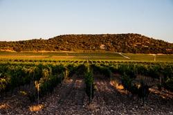 The walks between land of wine and its vines in constant evolution through the Denomination of Origin Ribera del Duero.