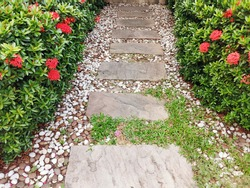 The walkway in the garden with green plants and flowers. landscape of path in the garden. Outdoor view of a small alley covered with gravel.