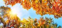 The warm autumn sun shining through golden treetops, with beautiful bright blue sky