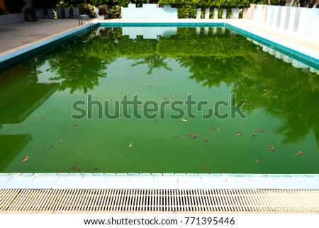 Old abandoned swimming pool with dirty water Free Images and Photos