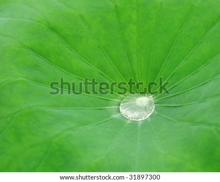 The water on the leaf