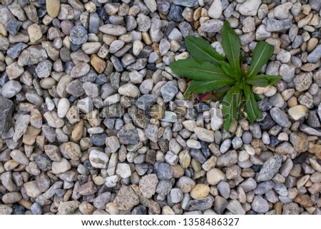 The weeds between the stones in the garden. Pebble around the house with the weeds. The fight with the weeds.  Spraying of weeds.