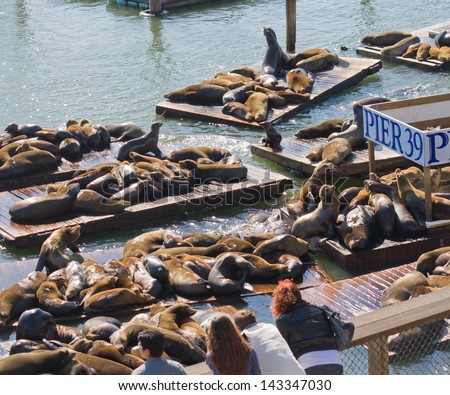 The well known Pier 39 in San Francisco with sea lions. Animals are resting on wooden platforms.