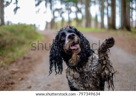 The wet dog gives his paw. Happy dirty dog in the wood.
