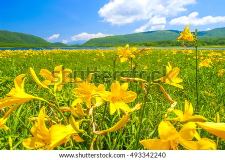 The wetlands where a day lily blooms