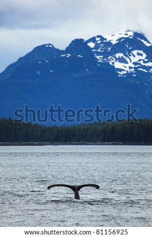 The whale shows the tail on     snow mountains of Alaska background