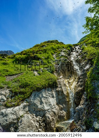 The white bubbling mountain stream plunges between flower-strewn alpine pastures over many stones down the steep slope into the valley. in the sky fly a swarm of mountain jackdaws around wild in veil  Stock photo ©