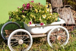 The white cart looks like a flower bed. There are many yellow and red flowers.