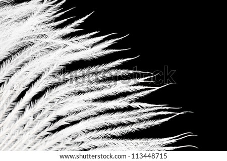 The white feather on a black background