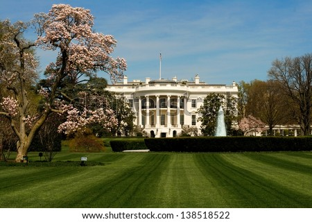 The White House front lawn during the peak of cherry blossom season.