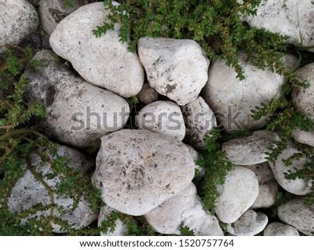 the white stones and wild plants