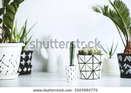 The white stylish interior filled a lot of plants and cacti. Space of nature lover.