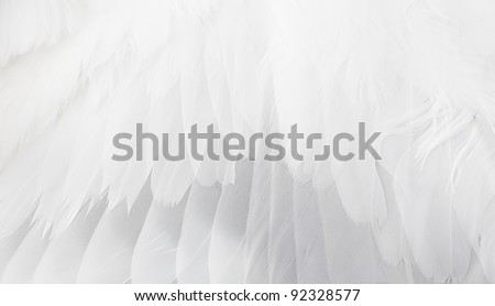 The white wing close up. #92328577