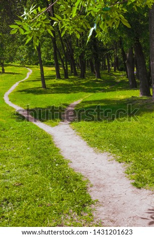 The wide path in the grass splits into two narrow paths in the park. Summer landscape