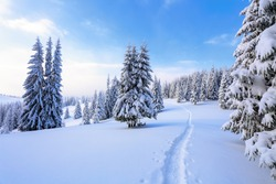 The wide trail leads to the forest.  Location Carpathian national park, Ukraine, Europe. Ski resort. Mountains are magical trees covered with white fluffy snow against the magical winter landscape