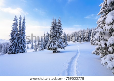 The wide trail leads to the forest.  Location Carpathian national park, Ukraine, Europe. Ski resort. Mountains are magical trees covered with white fluffy snow against the magical winter landscape #759033778