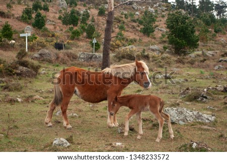 The wild horses