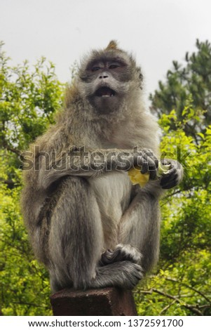 The wild monkey #1372591700