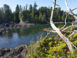 The Wild Pacific Trail in Ucluelet, BC. Vancouver Island Canada. Pacific Northwest.