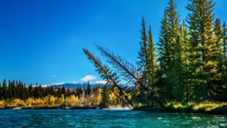 The wilderness landscape of Grand Teton National Park landscape in autumn, viewed from a raft in the Snake River, near Jackson Hole, Wyoming. Lodgepole pine and aspen trees line the riverbank.