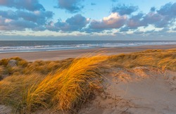 The wind blowing through the dune grasses with blur motion in the sand dunes in Ostend city (Oostende in Flemish) beach at sunset, North Sea, West Flanders, Belgium.