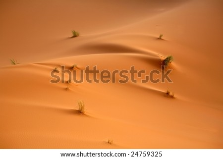 The wind sign's on the dunes in the Sahara desert. Background