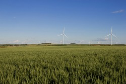 The wind turbines on Buffalo Ridge in southwest Minnesota, with a field of spring wheat in the foreground.