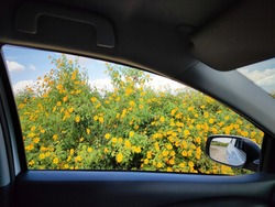 The windows of the car parked close to each other in a beautiful blooming garden of green and yellow flowers.