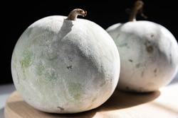 The winter melon also called ash gourd,white gourd, winter gourd, tallow gourd, kundur and Chinese preserving melon.