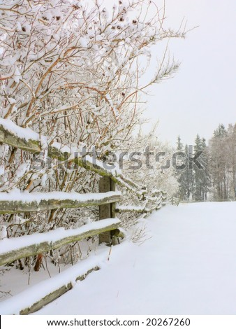The winter scene of a wooden rail fence line during a snow storm with pine trees in the background