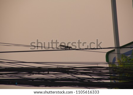 The wires are made of substances that allow the electricity to pass through. Referred to as conductor And electric conductors used to make the wire is a metal that allows electricity to pass through w #1105616333