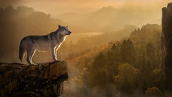 The wolf at the edge of the rock
