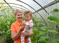 The woman gives to the little granddaughter sweet pepper in the greenhouse