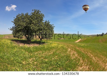 The wonderful spring day in southern Israel. The  huge field with blooming buttercups and flying in the sky, beautiful multicolored balloon