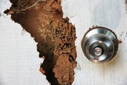 The wood door with termites damage.