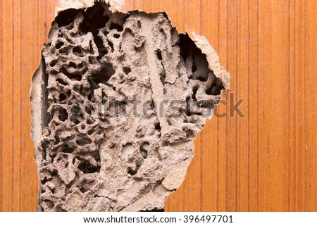 The wood door with termites damage