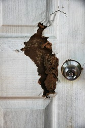The wood door with termites damage.  The  sting of termites eat wait to throw.