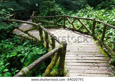 The wooden bridge as a shortcut to the wild