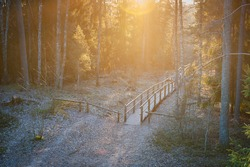 The wooden path leading through a forest. View on tourist wooden pathway among trees with sunbeams. Sunlit forest. Blue Hills of Ogre. Latvia.