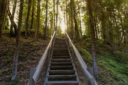 the Wooden staircase in the woods, summer