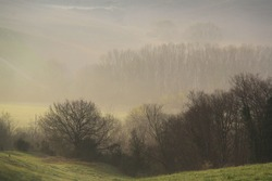 The woods engulfed in mist in the early morning sunlight.