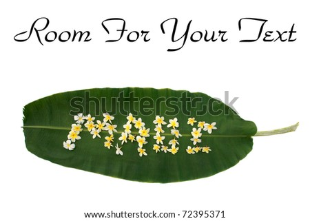 "the word ""Maui"" written on a banana leaf out of plumeria flowers isolated on white with room for your text"