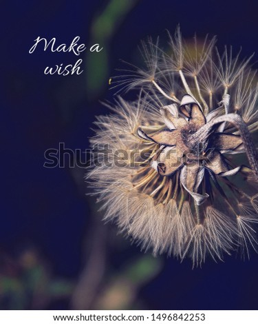 The words make a wish with a dandelion.