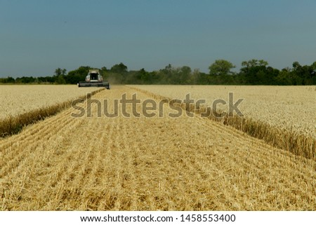 The work of the combine in the field of ripened wheat. Harvesting grain crops. Cropped shot, horizontal, free space, side view. The concept of agriculture and nature. #1458553400