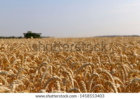 The work of the combine in the field of ripened wheat. Harvesting grain crops. Cropped shot, horizontal, free space, side view. The concept of agriculture and nature. #1458553403