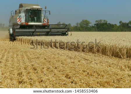 The work of the combine in the field of ripened wheat. Harvesting grain crops. Cropped shot, horizontal, free space, side view. The concept of agriculture and nature. #1458553406