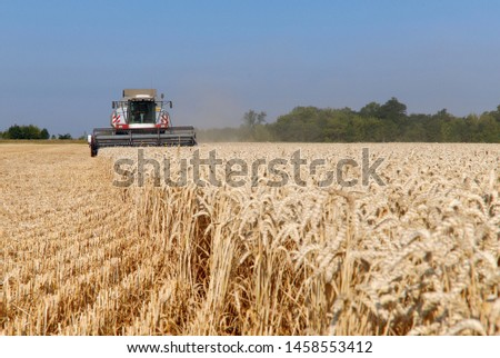 The work of the combine in the field of ripened wheat. Harvesting grain crops. Cropped shot, horizontal, free space, side view. The concept of agriculture and nature. #1458553412